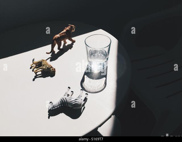 The tiger rules. - Stock-Bilder