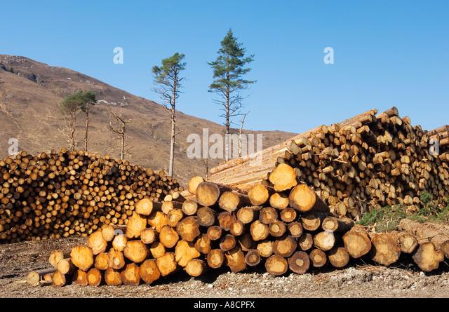 Softwood forestry conifer timber tree logging logs in Glen Carron, NE of Kyle of Lochalsh in the Scottish Highlands, - Stock Image