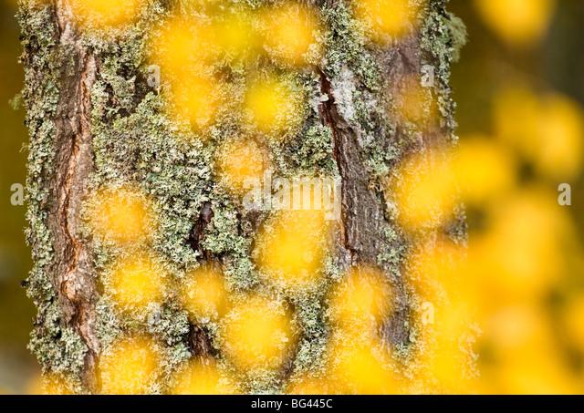 Autumn abstract, Cairngorms, Highlands, Scotland, UK - Stock-Bilder