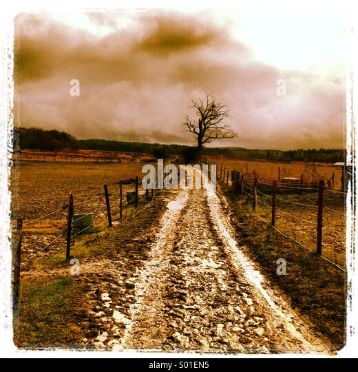 Muddy lane and an old oak - Stock Image