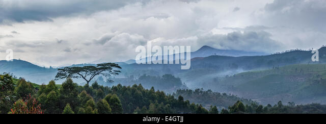 Panorama of cloudy morning in hills with lonely tree on sunrise in hills. Kerala, India - Stock-Bilder
