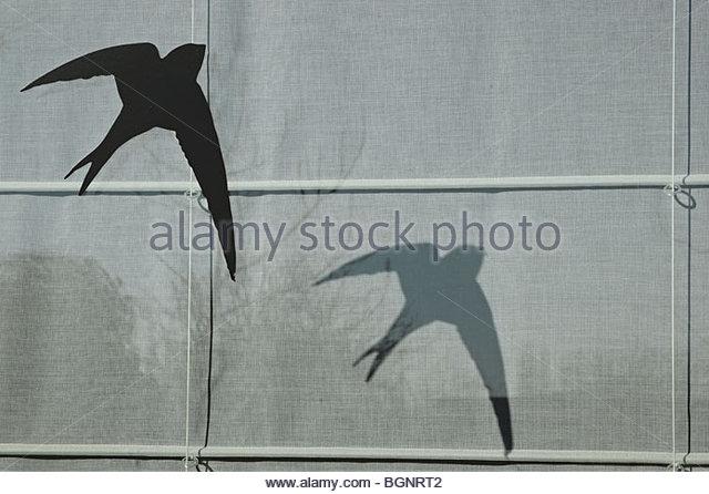 Bird Of Prey Silhouette Stock Photos & Bird Of Prey
