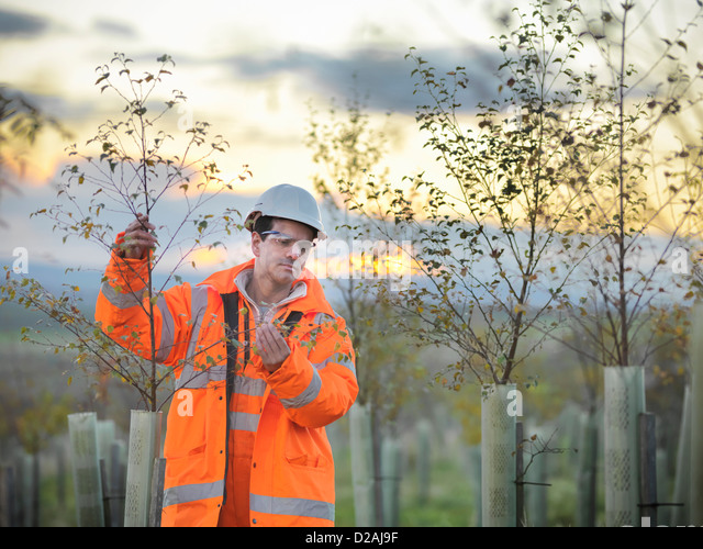 Ecologist examining young trees - Stock Image