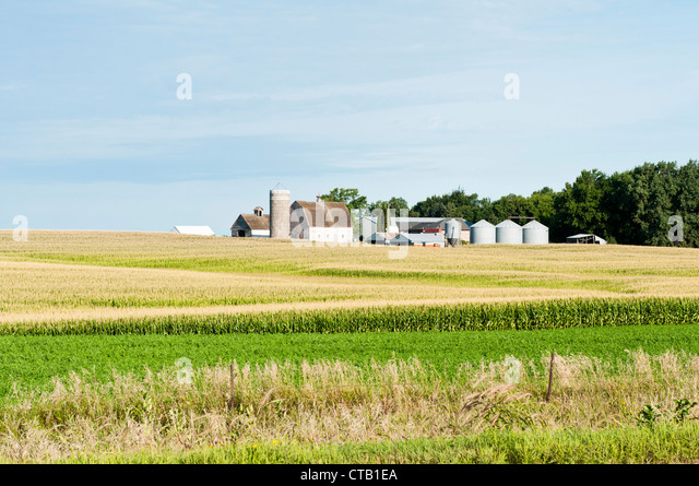Farm buildings are shown with a corn field in the foreground. - Stock-Bilder