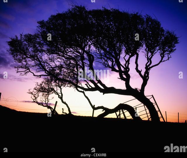Trees - Stock Image