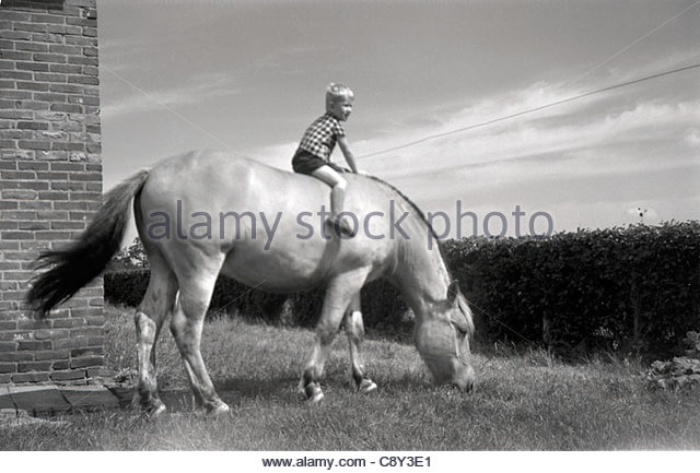 a little boy sitting on the back of a big horse Holland 1960s - Stock-Bilder