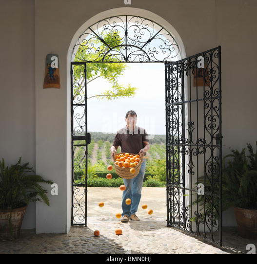 Man with basket full of oranges falling - Stock Image