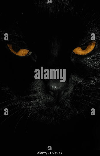 close up of the black cat eyes - Stock Image