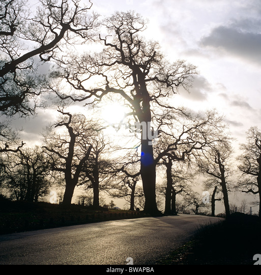 Winter In Richmond Park Surrey UK - Stock Image