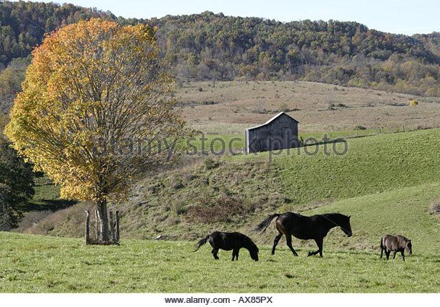 West Virginia Frankford rural scene horses fall colors farmland - Stock Image