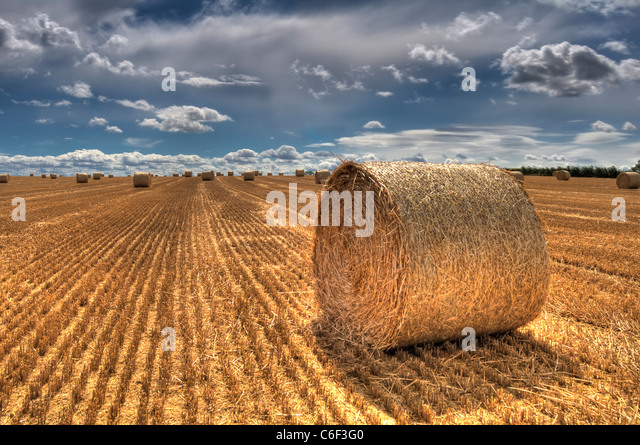 Hay bale in a field after harvesting in Leicestershire, England, UK - Stock Image