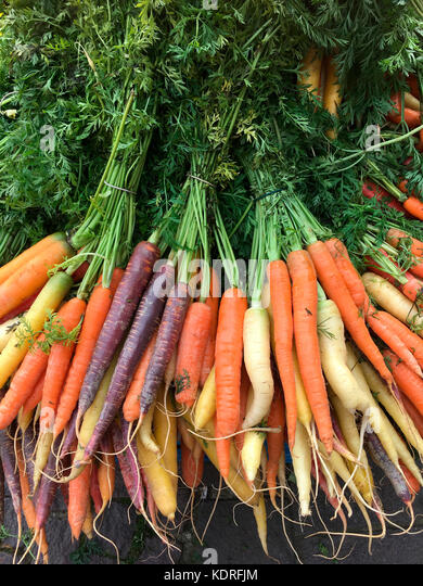 Organic carrots - freshly picked from the farmers field - Stock Image