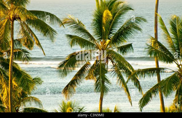 Waves break along the coral coast amongst coconut palm trees, Outrigger on the Laggon Resort,  Vita Levu Island, - Stock Image