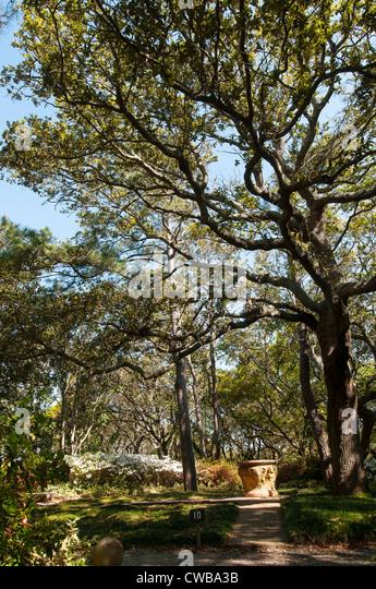Shaded path walkway with tall trees at Elizabethan Gardens on Roanoke Island, Manteo, North Carolina - Stock Image