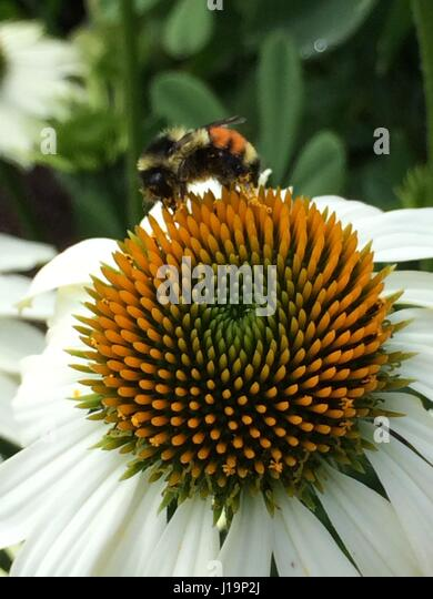 Buzz - Stock Image