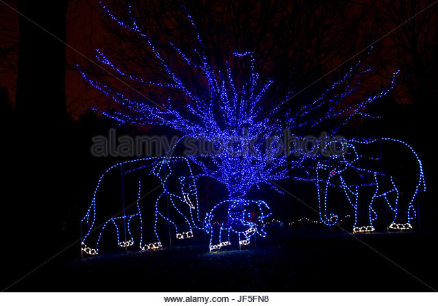 Blue elephants roam the annual 'Zoolights' holiday display. - Stock Image