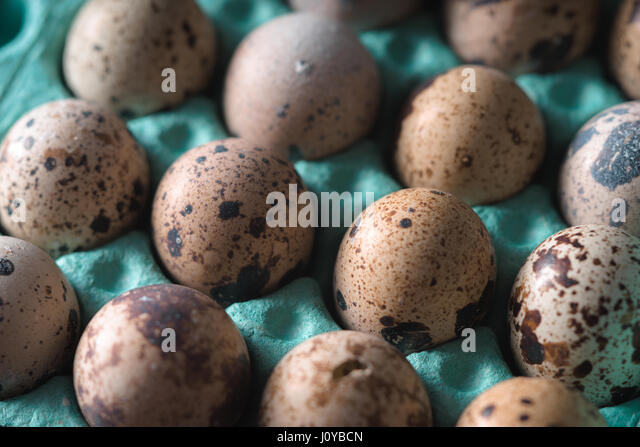 Quail eggs in the container cloth-up - Stock Image