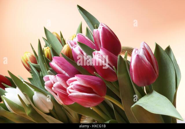 Tulips in a basket, Tulpen in einem Korb - Stock-Bilder