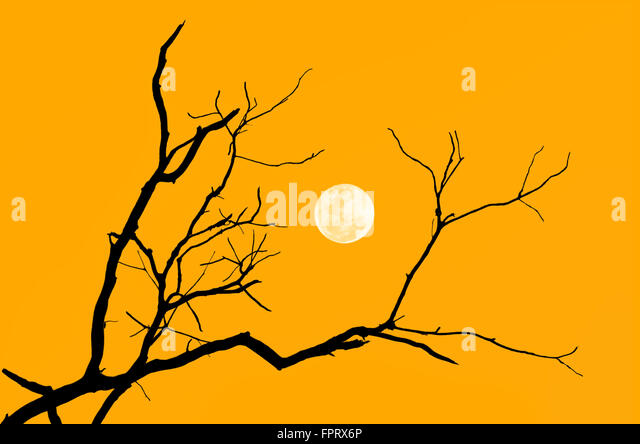 Branch Outline Stock Photos Amp Branch Outline Stock Images