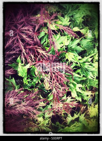 Contrasting Foliage - Stock Image