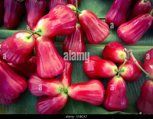 Syzygium Stock Photos & Syzygium Stock Images - Alamy