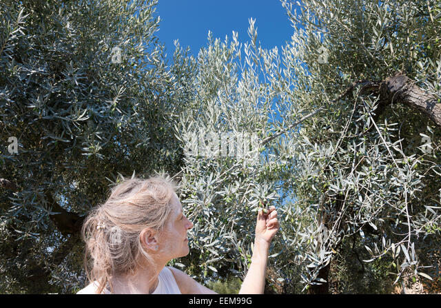 Spain, Catalonia, Tarragona, Tivissa, Female farmer looking at organic olives - Stock Image