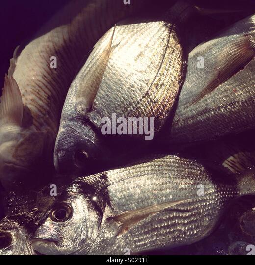 Fresh fish on market - Stock Image