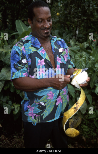 West Indies St. Lucia Rainforest Road Gimmie Gimmie Estate Black male resident cutting grapefruit peel - Stock Image