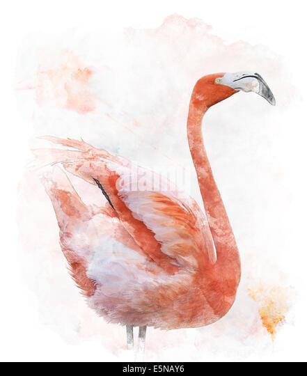 Watercolor Digital Painting Of  Flamingo Bird - Stock Image