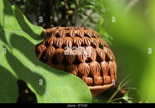 Earthen Lamp in Sunlight with Greenery - Stock Image