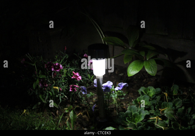 The garden of the night. - Stock Image