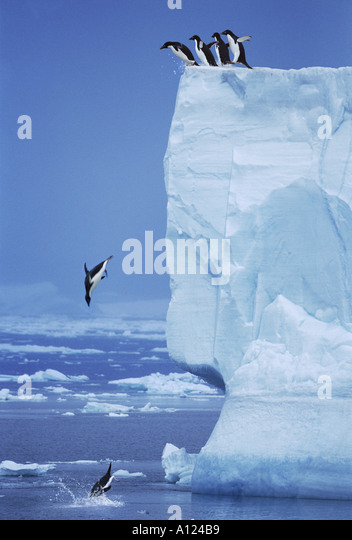 Adelie Penguins jumping off iceberg Antarctica - Stock-Bilder