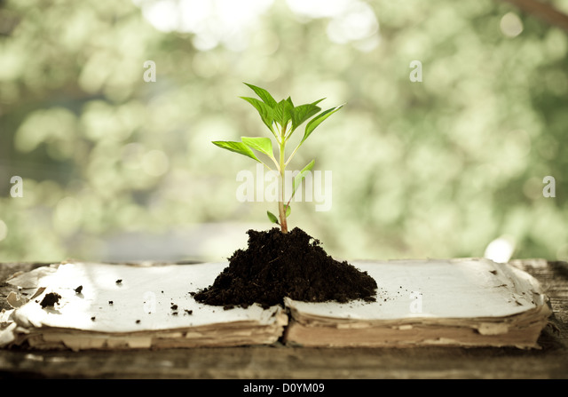Young plant against natural background - Stock Image