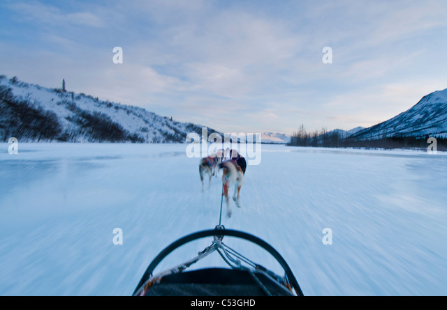 Musher's perspective while mushing down the North Fork of the Koyukuk River in Gates of the Arctic National - Stock Image