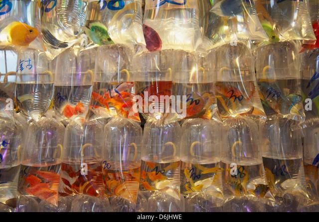 Tropical fish at pet shop, Mongkok, Hong Kong, China, Asia - Stock Image