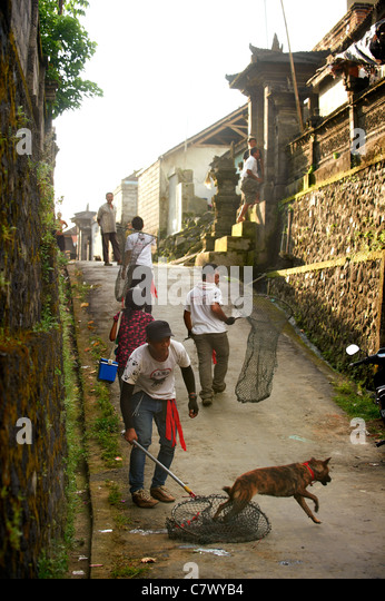 Rabies vaccination team in Bali - Stock Image