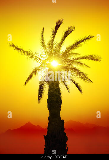 Palm in desert mountains at the sunset - Stock Image
