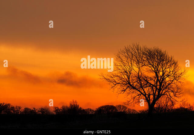 Large tree with smaller trees and bushes beneath it in silhouette against a bright orange sky at sunrise - Stock Image