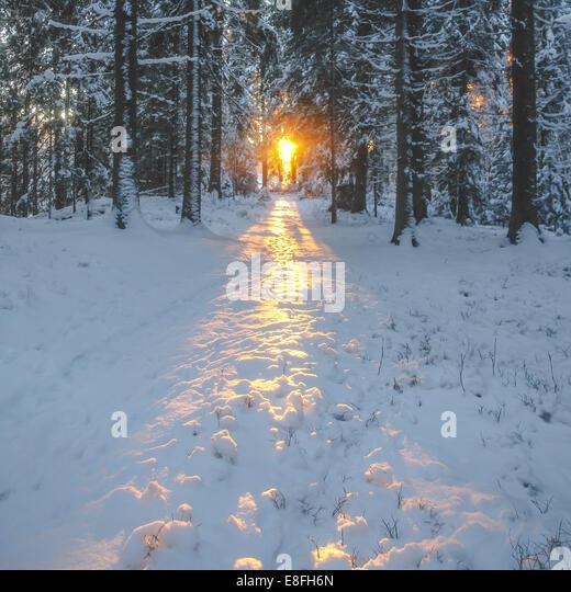 Sunlight in woods - Stock Image