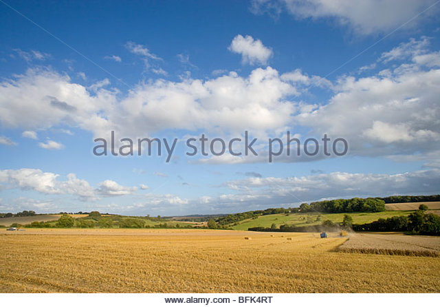 Clouds in blue sky over sunny wheat field being harvested - Stock Image