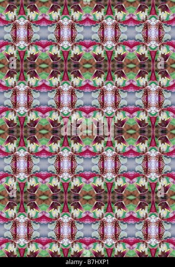KALEIDOSCOPIC ORCHIDS AS WALLPAPER - Stock Image