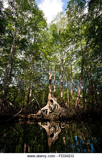 Mangrove forest in Coiba national park, Pacific ocean, Veraguas province, Republic of Panama. - Stock-Bilder