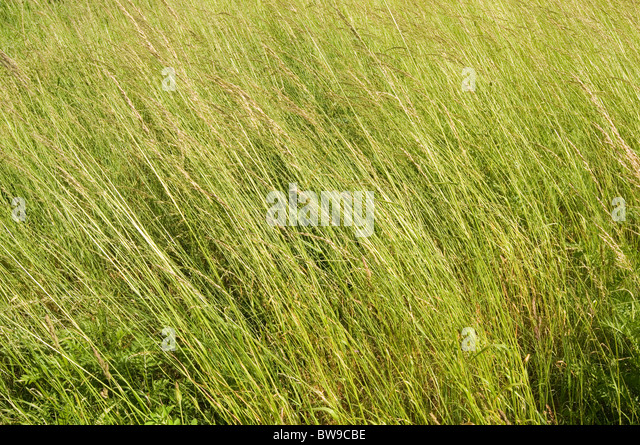 natural wood meadow grass - photo #9