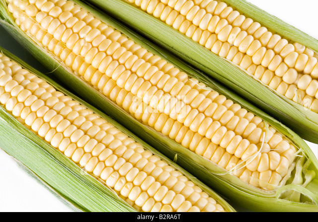 maize - Stock Image