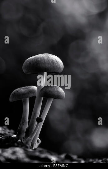 Indonesia, Jakarta, Close up of mushrooms - Stock Image