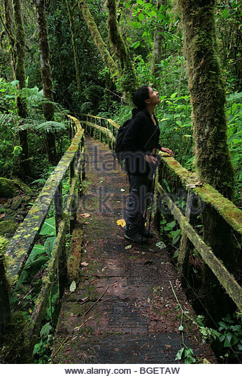 Naturalist in La Amistad national park in Chiriqui province Republic of Panama - Stock Image