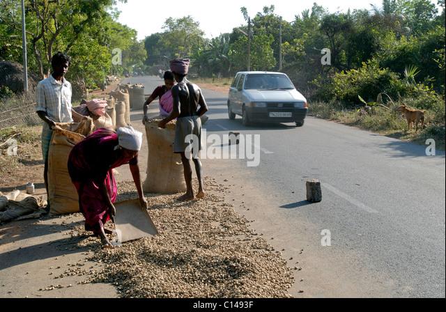 GROUNDNUT DRYING ON THE ROAD TAMILNADU - Stock-Bilder