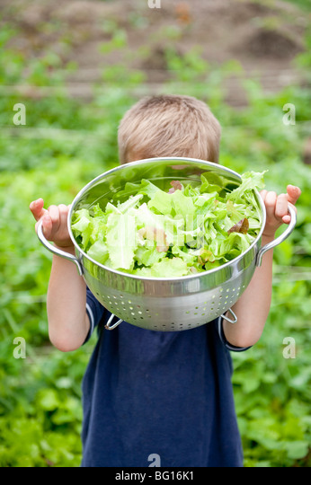 Boy with bowl of lettuce from garden - Stock Image