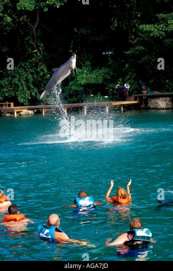 Jamaica Dolphin Cove animal encounter dolphin leaping Ocho Rios - Stock Image