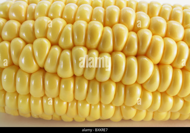 Corn Cob - Stock Image